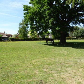 Horse in field under tree