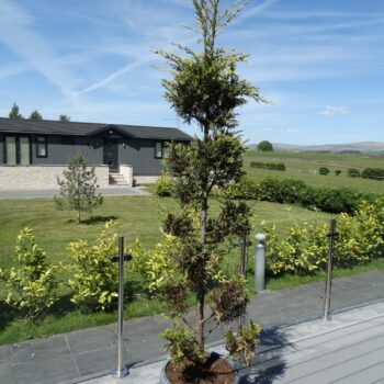 Holiday home and countryside at Moss Bank Lodges